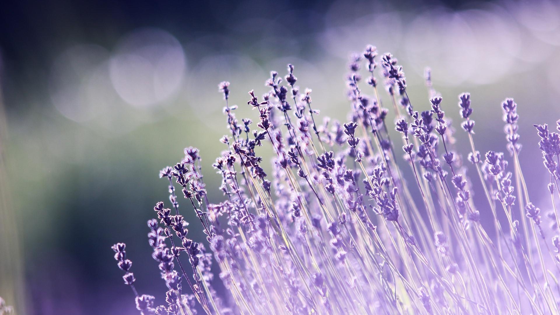 Choisir des fleurs est un art qui demande de la maîtrise